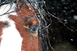 Pony In The Snow 1 by PhotographyisArt123
