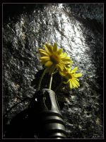 Flowers 4 Ammunition by gilad