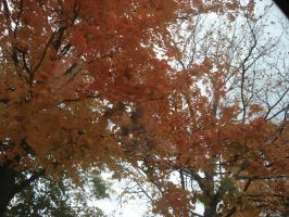 Fall Color by neice1176