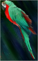 Parrot by juggsy