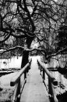 Gothic Willow by EarthHart