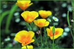 Yellow in spring by ShlomitMessica