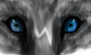Wolf's Eyes by DraconicX