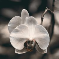 Floating Orchid by KBeezie