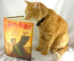 Cats love HP too. by Lady-Blue