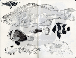 Fish Drawings by DrummerGirl375