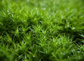 Moss by Inilein