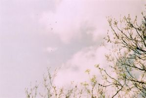 Sky by sophierevell
