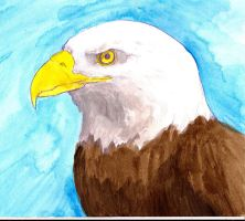 Bald Eagle colored by MetalReaper
