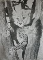 Charcoal: Cheetah Cub Stage 8 by Indiana8Jones