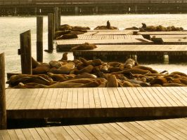 The Seals by Rustysnow