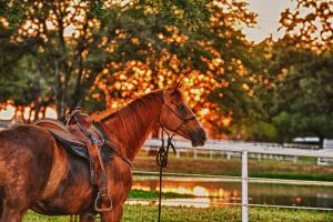 Golden Sunset Horse HDR Stock by JSF1