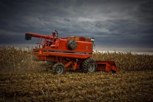 2008 Harvest by cthacker