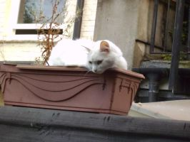 Cat In A Flower Pot 2 by icediamond7