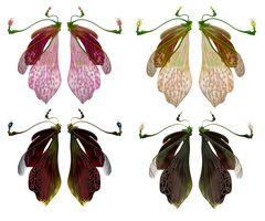 Fairywings pack 01 by gatterwe