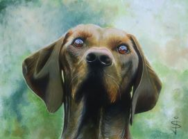 Acrylic - Brown Dog by NorthumbrianArtist