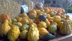 Gourds by loveatstake615