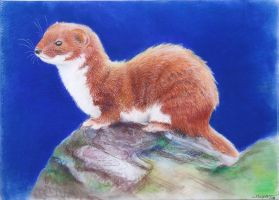 Least Weasel by munchengirl