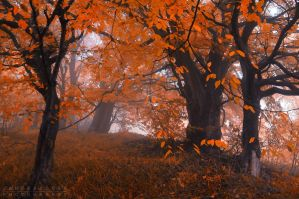 -Old friends- by Janek-Sedlar