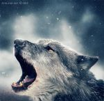 prowling wolf by ZedLord-Art