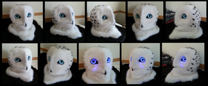 Snowy Owl Head by CuriousCreatures