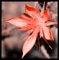 In Red by Wilmsy