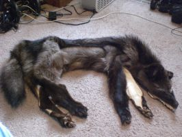 Black Coyote SOLD by blondecoyote