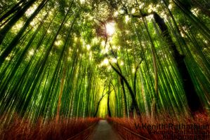 The Taboo Bamboo Forests by V-Kenith-Rathathian