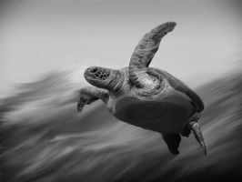 Turtle Painting bnw by mb-neo