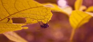 up side down by SunshadePICTURES