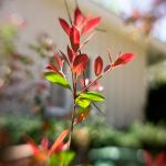 Red And Green Leaves by LDFranklin