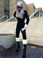 Black Cat / Felicia Hardy by perfectmuse