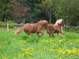 First day on grass by Wulfi