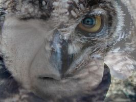 owl and blue eye by GisaGon