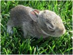 Baby Bunny by Sugargrl14