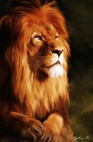 Lion by Malla13