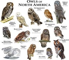Owls of North America by rogerdhall