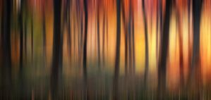 Autumn Woodland Abstract by CeriDJones