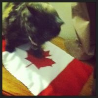 my cat with my Canada flag by lisabean