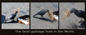 The best garbage hole in the World. by jennystokes