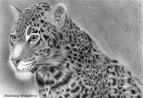 Where to watch the leopard by Anastasya-Murashova