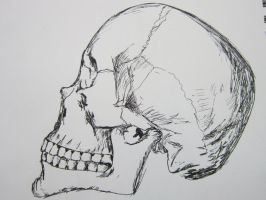 Skull by nosepace