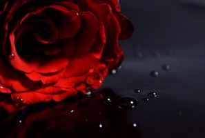 Rose and tears by baraniaczek