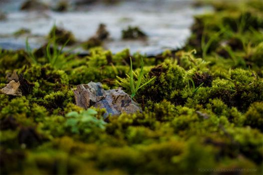 Moss Under The Bench by KoooKus
