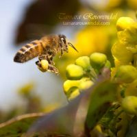 Busy Bee by TammyPhotography