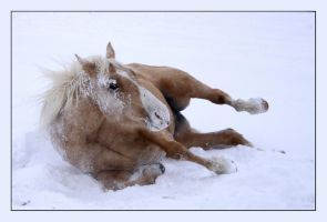 Snow Attack by Jen2Cal