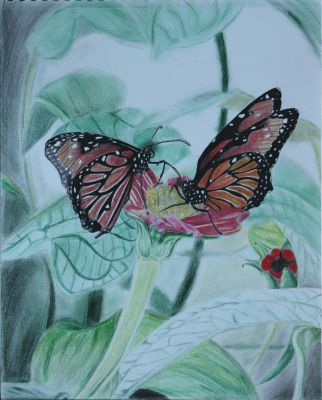 Monarch Butterflies Draw Along by Visualiart