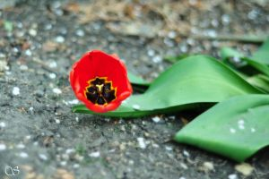 The beauty on the ground by saldon