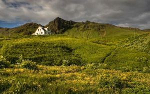 Iceland - in the green space by PatiMakowska