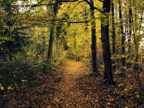 Autumn path 3 by FrantisekSpurny